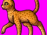 Leopardenstern