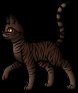 Tigerstar.A