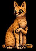 Leopardstar.SV