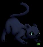 Blaustern.Junges.KittyVanilla