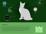 Ivypool Website