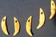 Подвески из зубов лисицы