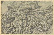 Рештки поперечної перегородки та основи печі з валькової глиняної обмазки в житлі № 10 на поселенні в уроч. Коломийщина І (1936 р.)