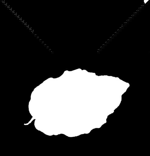 BuchenClan (byLo)