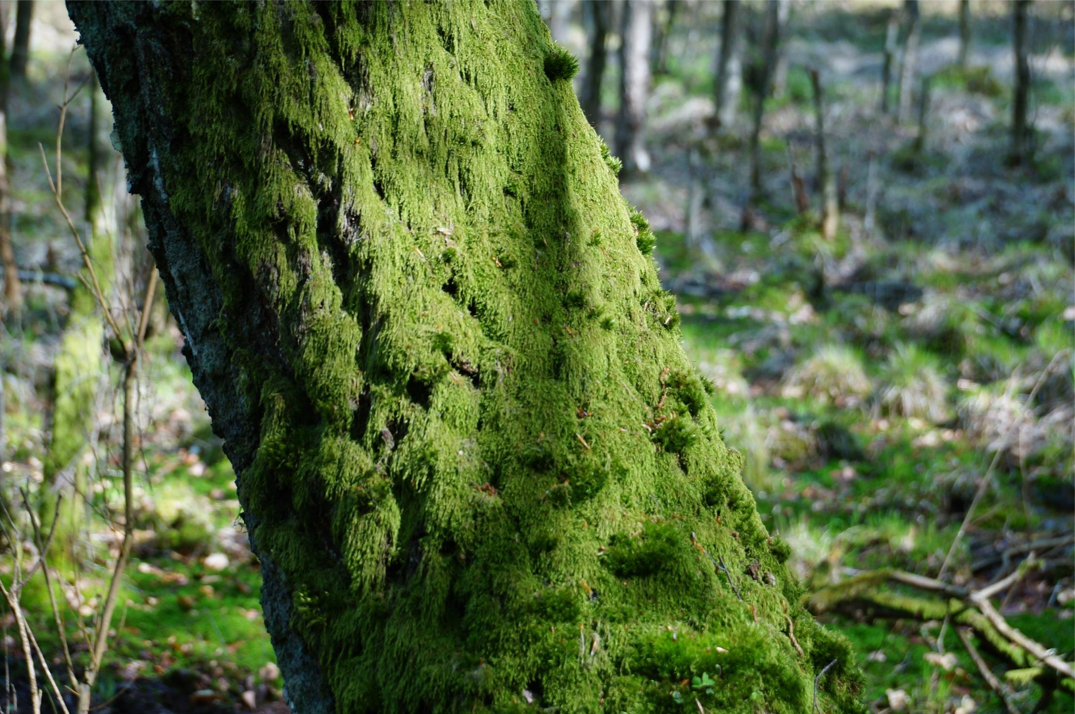 Der Stamm, der alles zusammenhält (Der Baum der Clans)