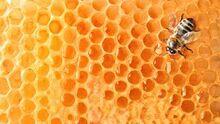 Мёд.jpg