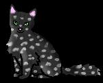 Капелька звездный котенок