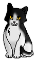 Лоскутик (котёнок) ГП