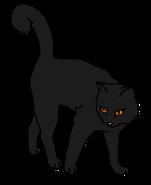 Кора (воительница)