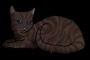 Дождевой Цветок кошка клана