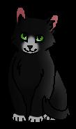 Кротик (котёнок).