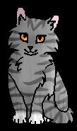 Дроздовушка (котёнок)