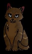 Речушка (котёнок)
