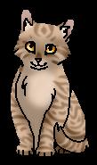 Одноусик (котёнок)