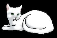Половинка Луны (кошка клана)