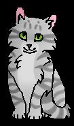 Смерч котенок