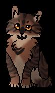 Коготок (котёнок)