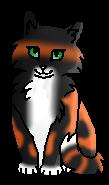 Цветинка РП (котёнок)