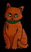 Шрам (домашний котёнок)