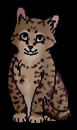 Попрыгун (котёнок)