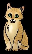 Гладколап котенок