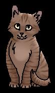 Колючник (котёнок)