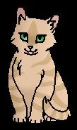 Цветочная Лапка (котёнок)