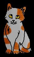 Песочек (котёнок)