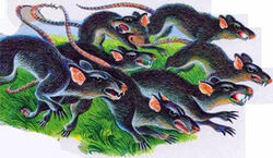Крысы Секреты племён.jpg