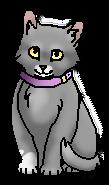 Рина (котёнок).