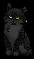 Орлокрылый (котёнок)