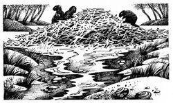 Бобровая плотина Четвёртый оруженосец.jpg