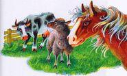 Лошади овцы коровы секреты племён