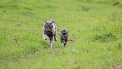 Два кота бегут.jpg