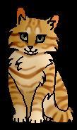Крапивничка котёнок