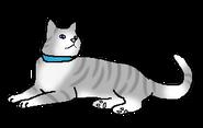 Пчелоус - домашний кот