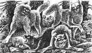 Больные Пёрышко и Белогрудый Бушующая стихия