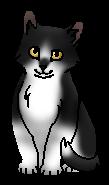 Бледнолапка котенок