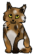 Сол (котёнок)