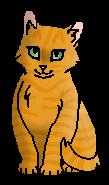 Солнышко (Небесное племя) котёнок