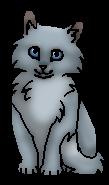 Тучка (котёнок) РП