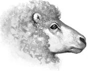 Овца Секреты племён англ