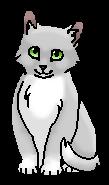 Иглолапка (котёнок)