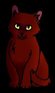 Сапсанчик (котенок)