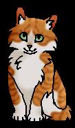 Листопад (котёнок)