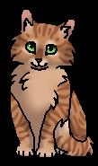 Грозовичок (котёнок)
