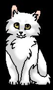 Тучегривая (котёнок)