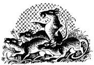 Крысы Миссия Огнезвёзда