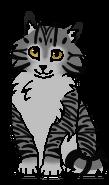 Котёнок Лужицы