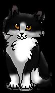 Сорочонок (котёнок)